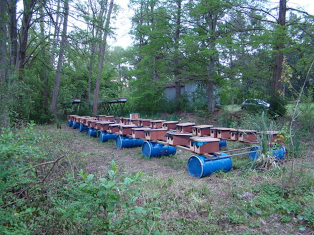 Resultado de imagen para apicultura argentina