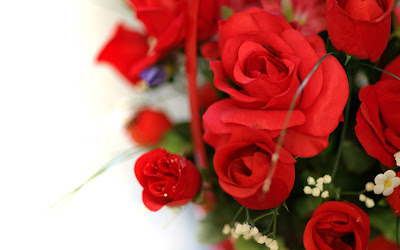 wedding red rose
