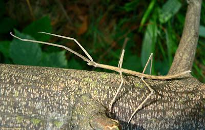 Los insectos Monografias com - imagenes de animales insectos