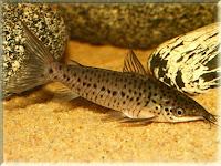 Porthole Catfish Pictures