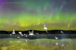Batty aurora (c) John Ashley
