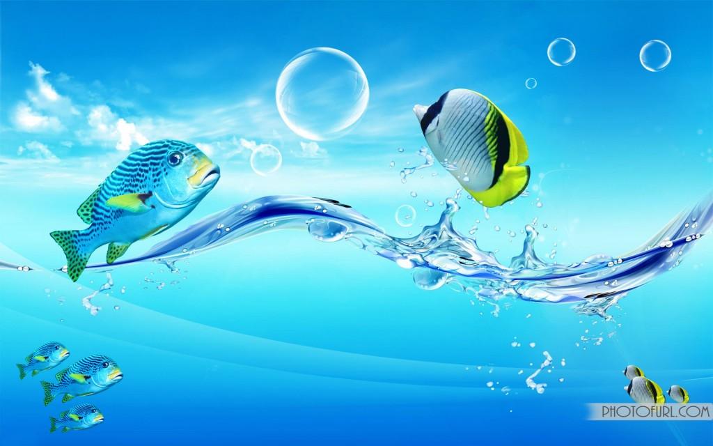 Fish Wallpapers  Full HD wallpaper search
