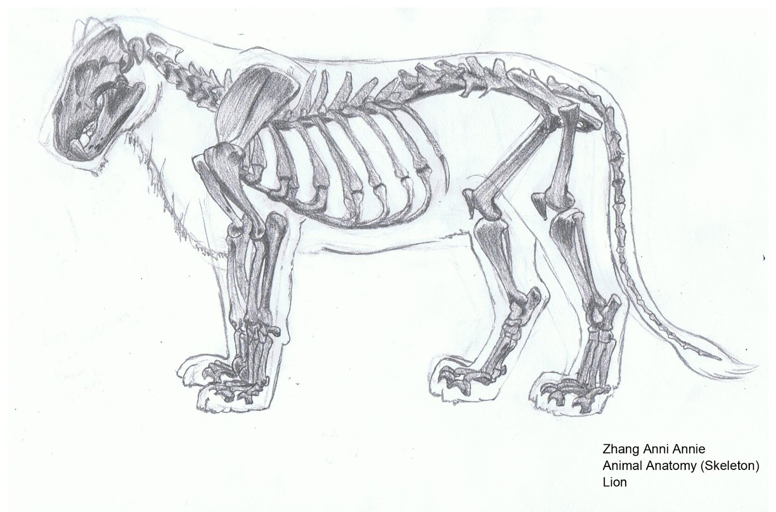 Lion skull diagram - animalcarecollege.info