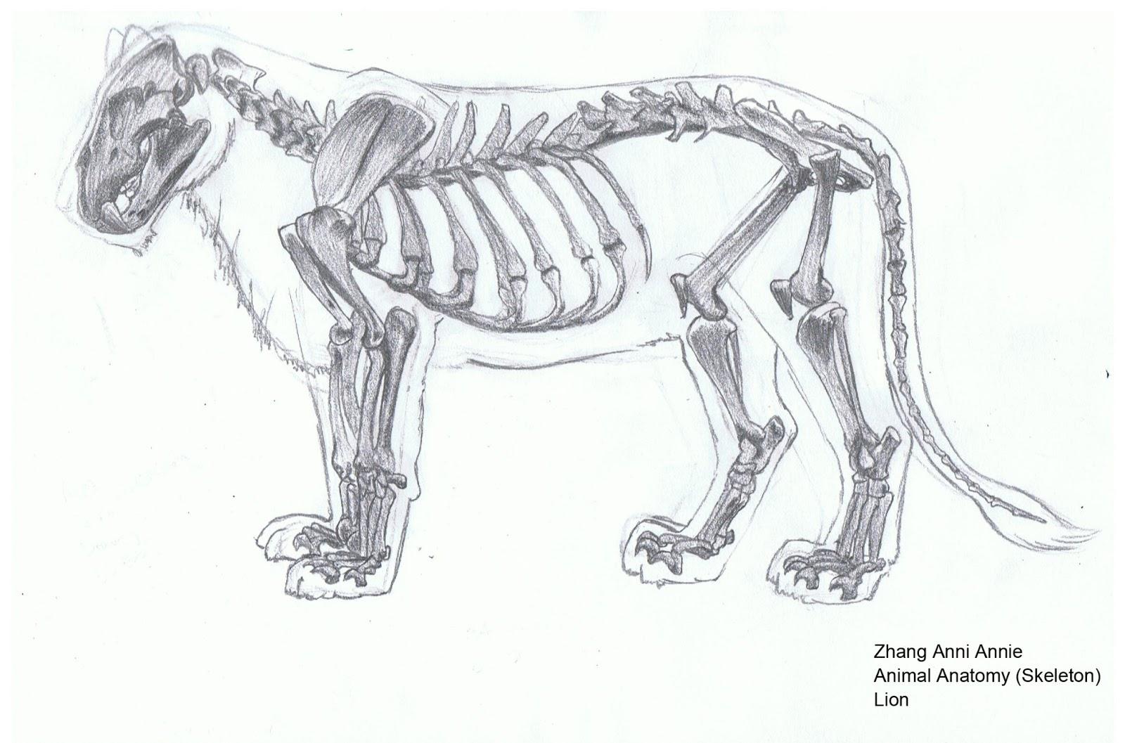 Lion Skull Diagram