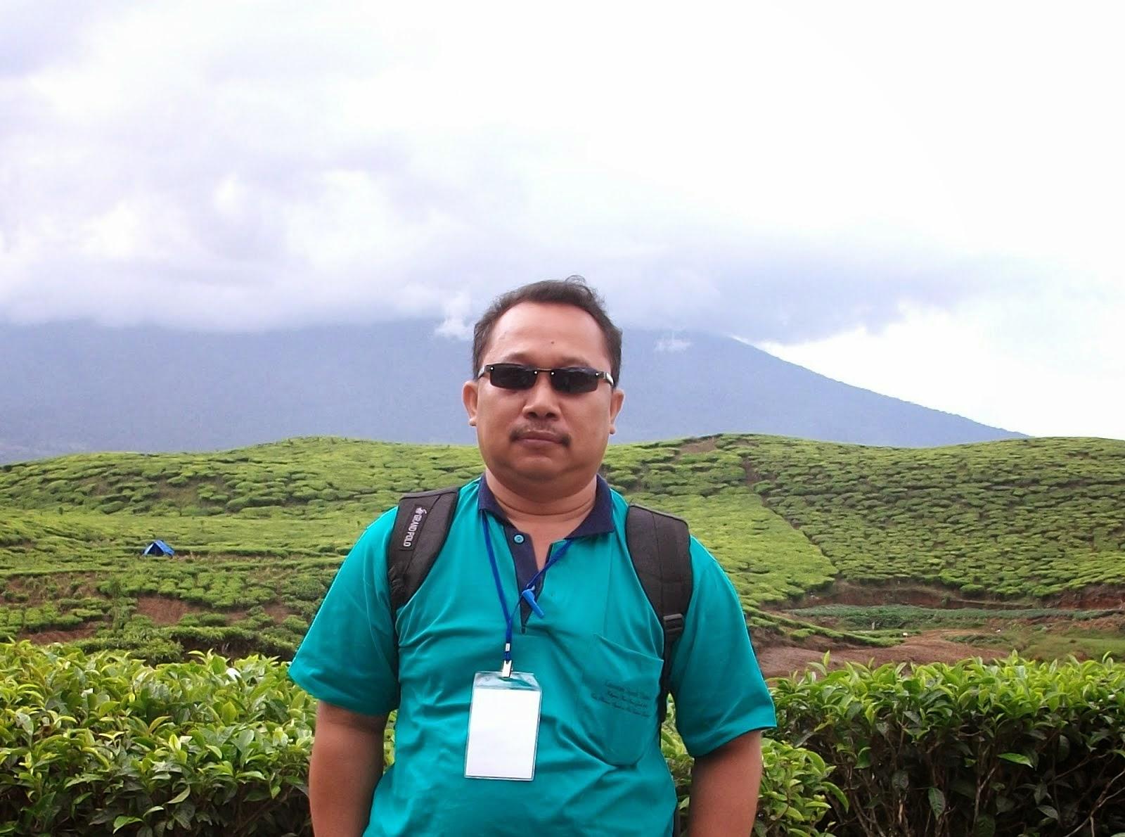 Perkebunan Teh Kayu Ara di Kabupaten Kerinci Provinsi Jambi
