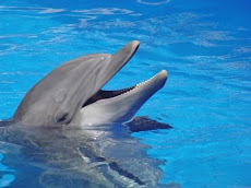 BECOME AN ACTIVIST THRU SAVEJAPANDOLPHINS.ORG