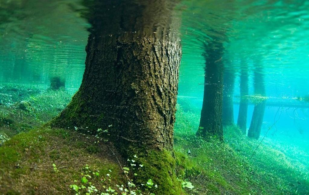 Австралийское зелёное озеро grüner see