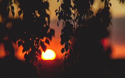Sunset Between Leaves Photo HD Desktop Wallpaper