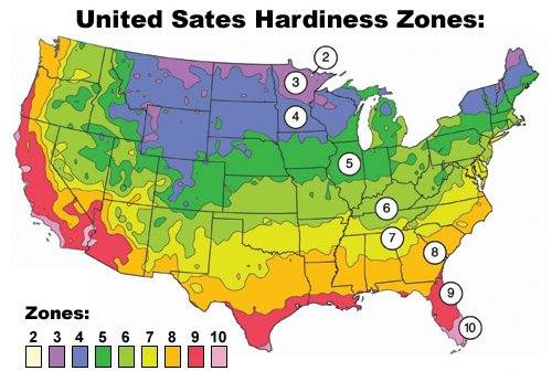 lavender garden cottage your hardiness zone for plants
