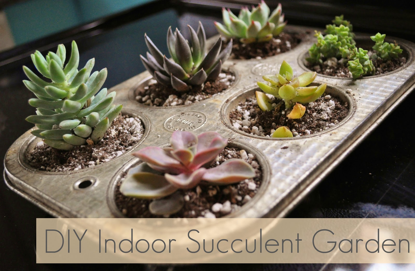jessicaNdesigns DIY Indoor Succulent Garden