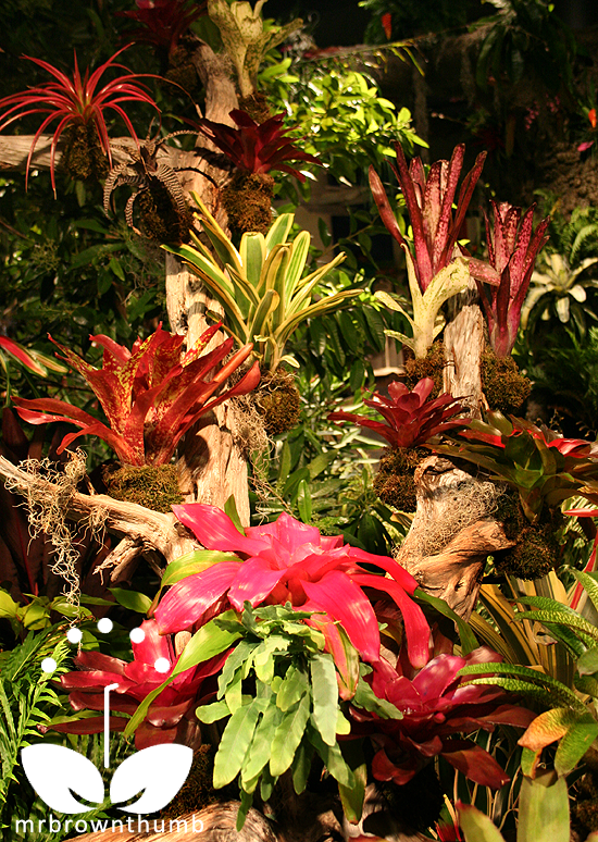 Bromeliad tree Macy's Flower Show Chicago