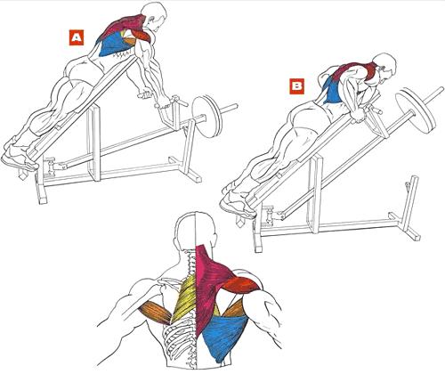 Упражнения крылья домашних условиях
