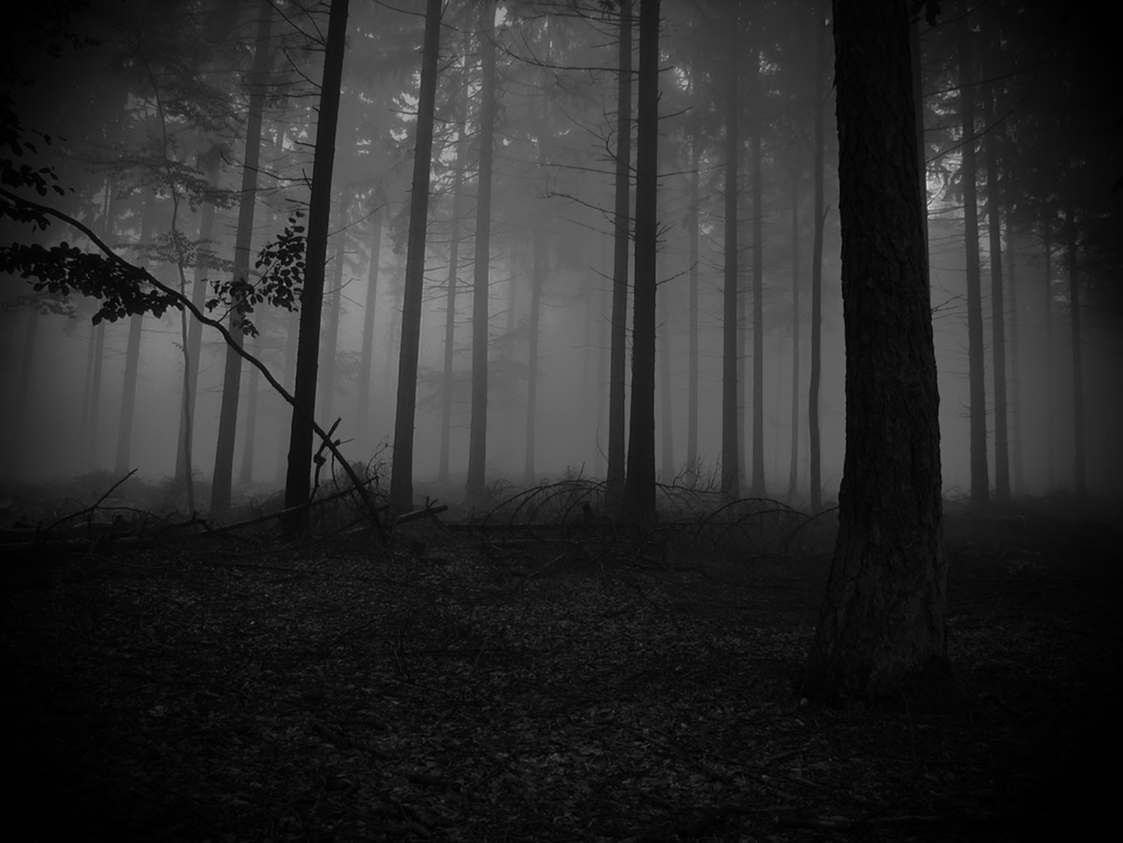 Del reino de las sombras a Hans Zimmer - Caja Nostra