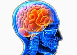 المخ والاعشاب