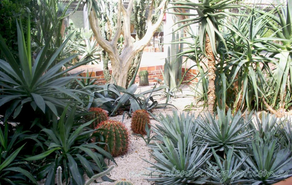 invernadero desertico