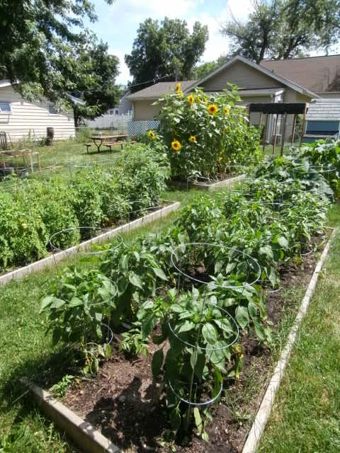 We've been urban farming for about 3 years, and have a few tips for making the most of your limited outdoor space.