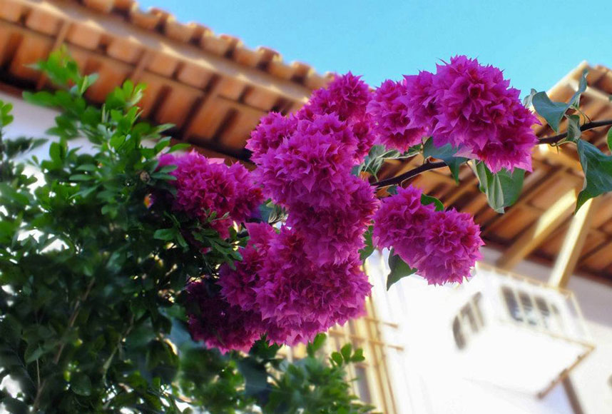 plantas para jardim muito sol: Flores que gostam de muito sol são opções para jardins em Valadares