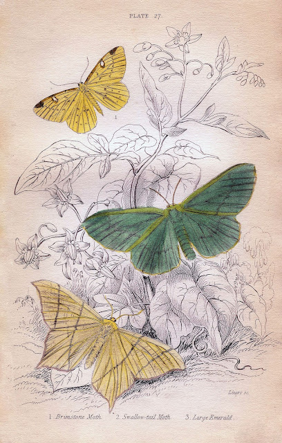 Mi maleta de recortes l minas antiguas con mariposas - Laminas antiguas para cuadros ...