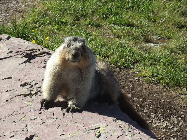 Marmot-Glacier-National-Park