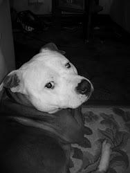 My Dog Dip!