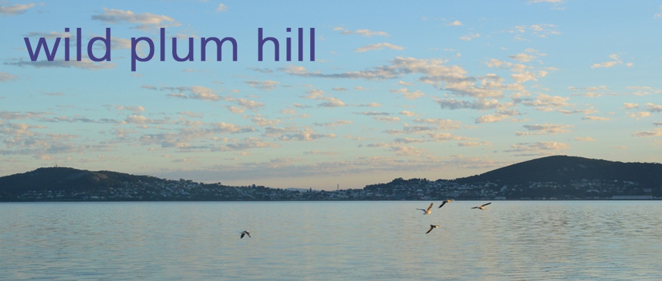 wild plum hill
