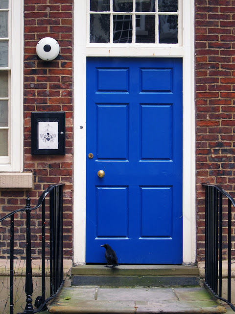 rook at blue door - Photograph by Tim Irving