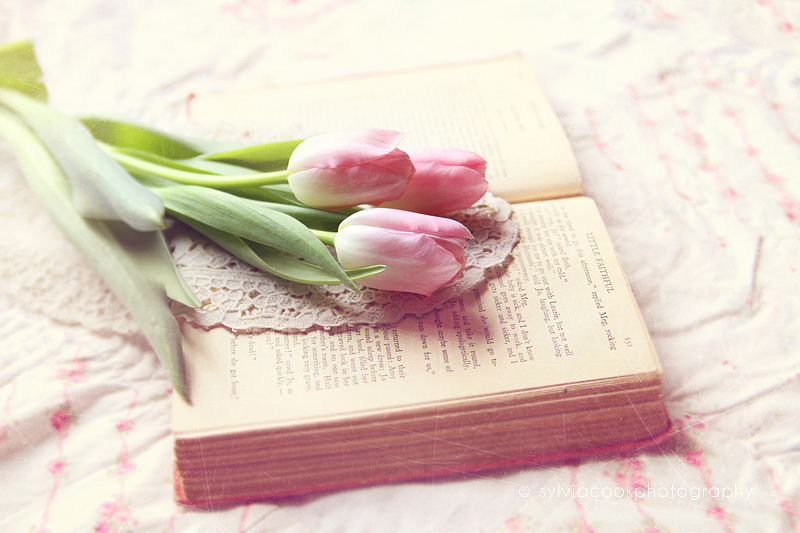 shabby chic photograph, pastel photograph, tulips