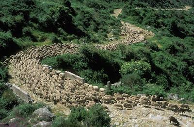 schapentrek pyreneeën