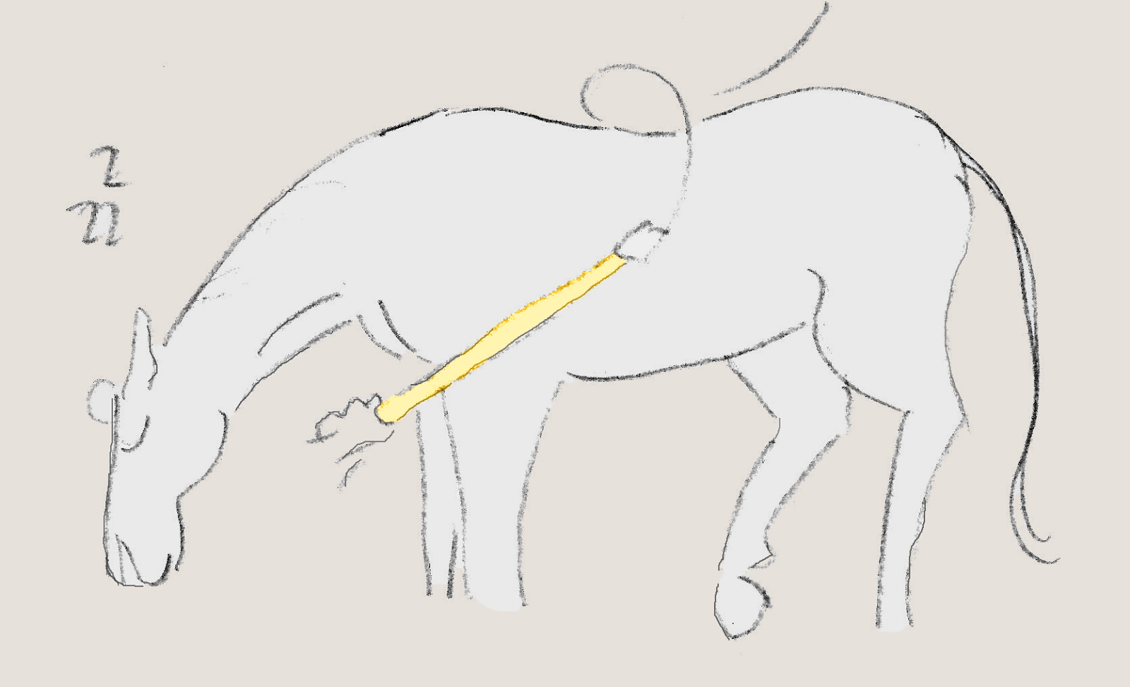 how to  not  desensitize your horse