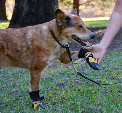 dog shoes for hot or cold