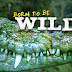 Born to be Wild – May 1 2016 Full Episode