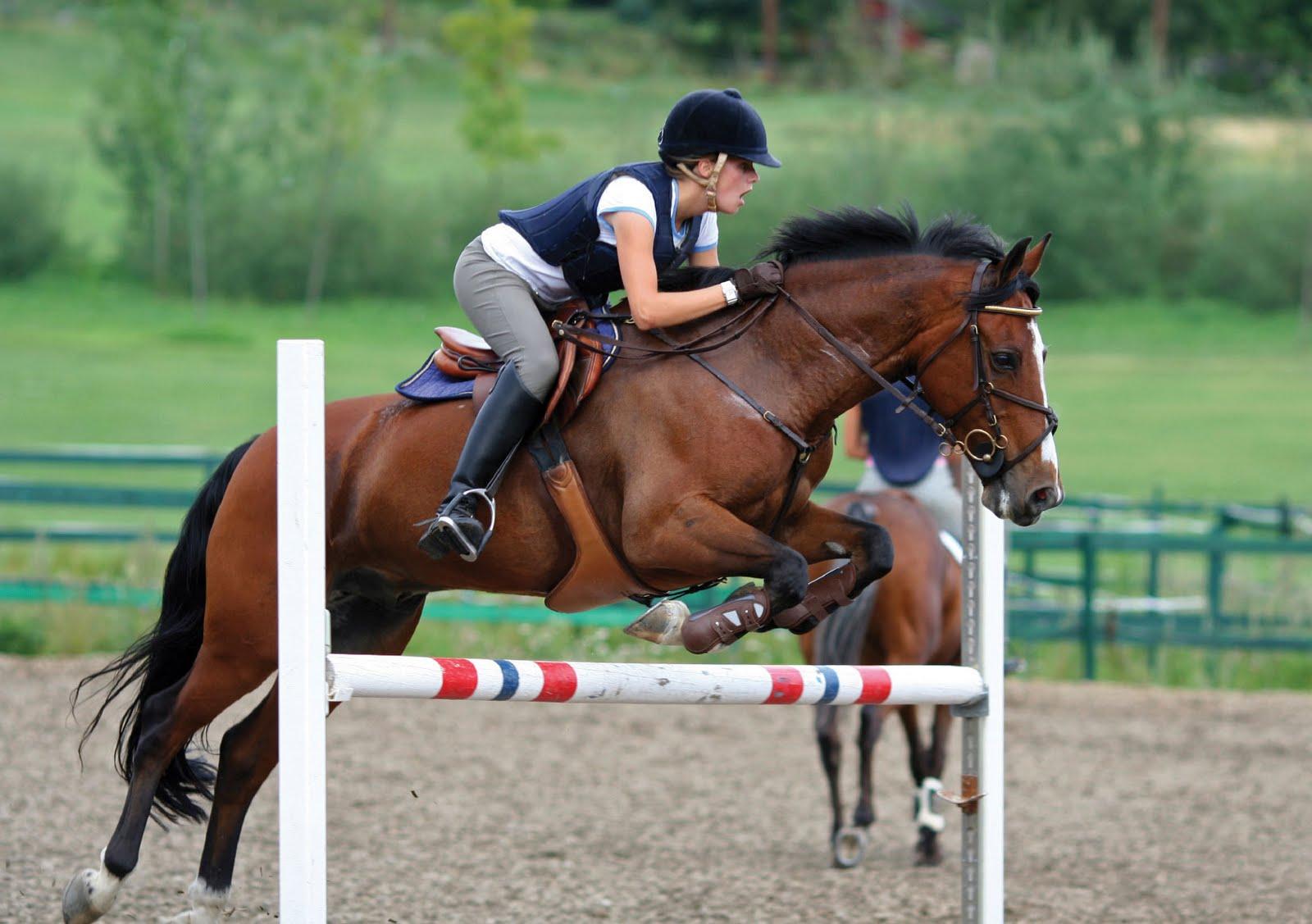 HD Animals Wallpapers Friesian Black Running Horse Wallpaper