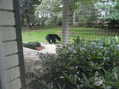 Biltmore Forest bear killing highlights growing friction between people, wildlife