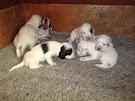 Cachorros nacidos el 8 de Enero de 2015
