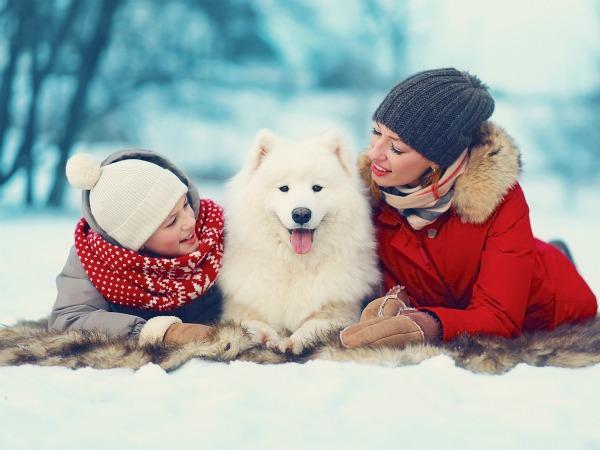¿Cuáles son las mejores mascotas para regalar en Navidad?