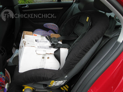 Chicks arriving at the post office should be picked up in order to avoid an all-day tour around town in a postal truck.