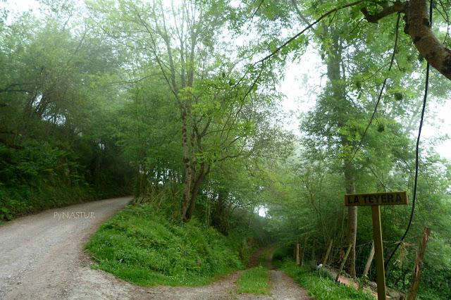 Ruta del Bosque de Cea - Parres