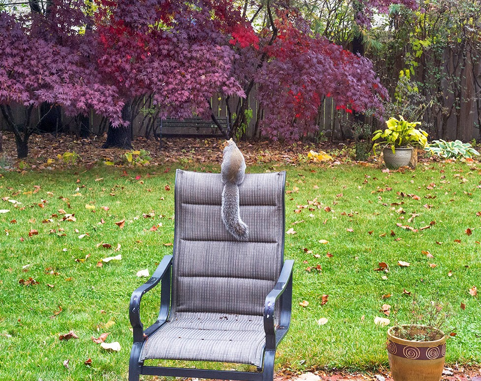 squirrel on chair