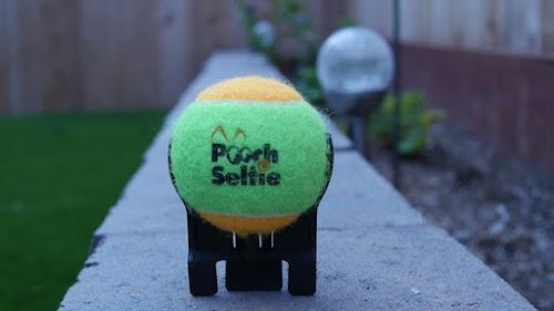 Selfie com seu cachorro