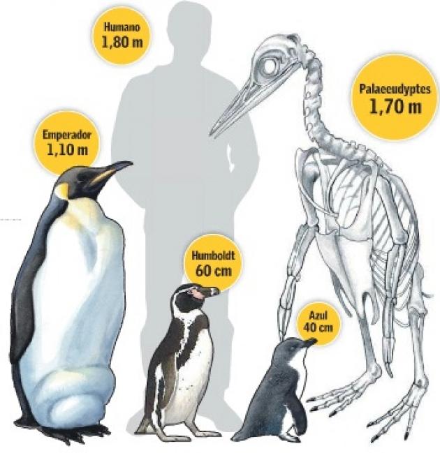 Hallaron en la Antártida restos de pingüino gigante | iEnterate