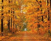 CAMINANDO CON EL OTOÑO autumn