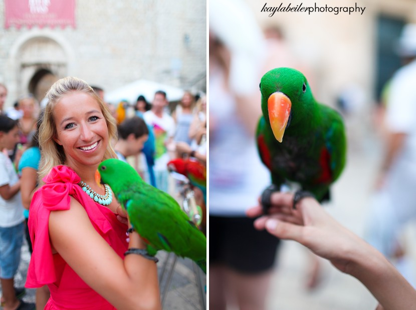 parrot in dubrovnik photo