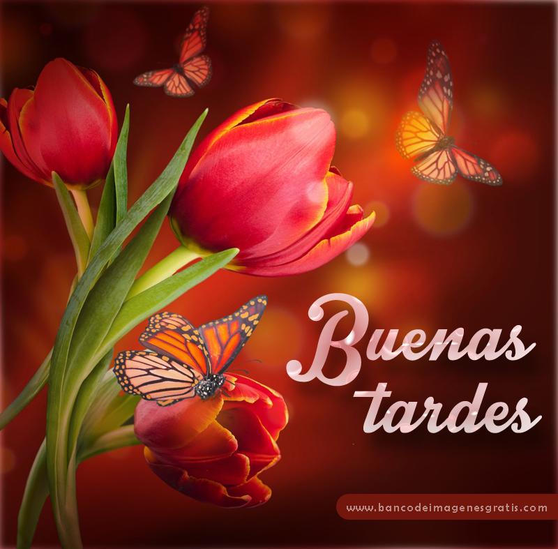 Buenos días,Tardes, Noche ENERO 2018 Buenas%2Btardes%2Btulipanes%2By%2Bmariposas