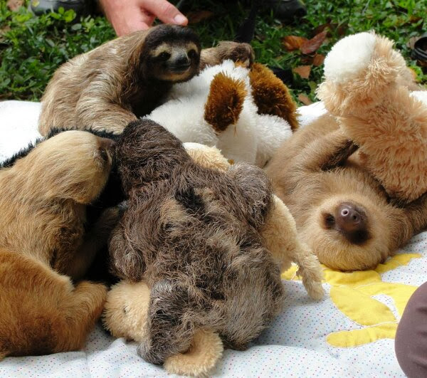 Funny animals of the week - 3 January 2014 (40 pics), sloths playing with stuffed animals