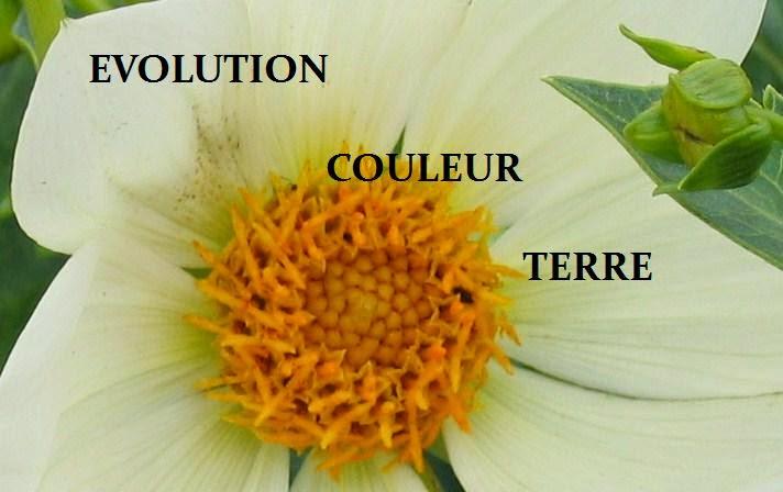 EVOLUTION COULEUR  TERRE