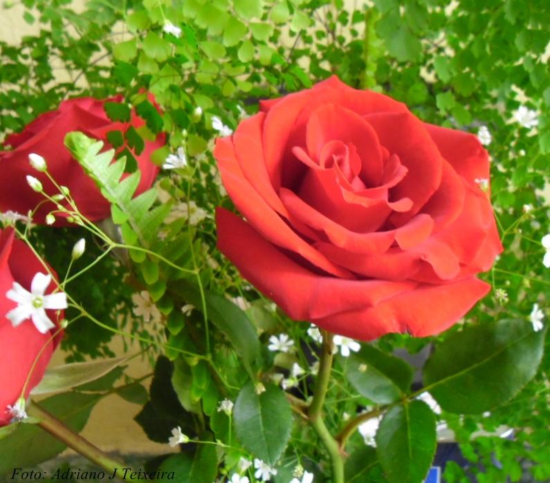 Datoonz.com = Jardins De Rosas Vermelhas ~ V?rias id?ias ...