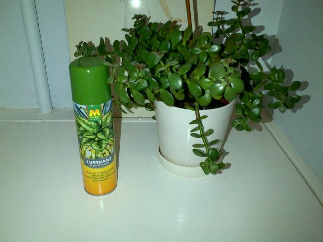 lestracasducabas lustrant pour plantes vertes