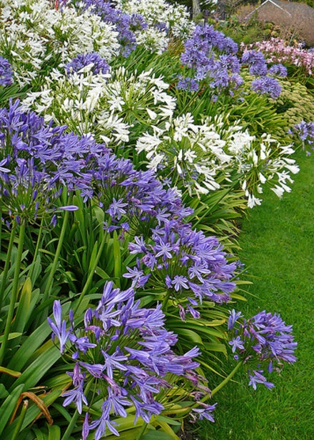 flores para jardim verao : flores para jardim verao:Um jardim para cuidar: Uma flor indispensável ao seu jardim no verão
