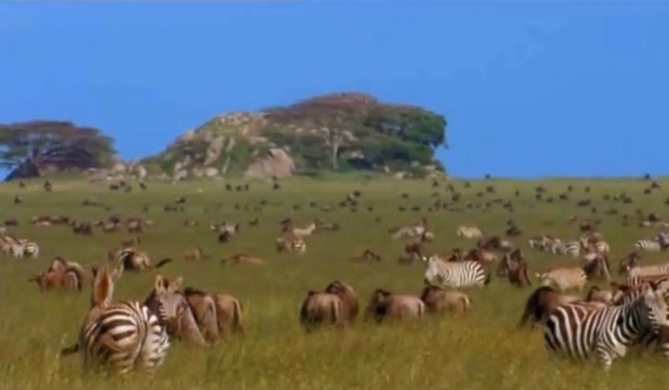 Kenya Facts | Safari Highlights, Wildlife, & Kenya Reviews