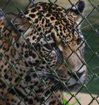 Sobre o Zoológico Guarani